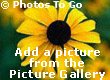 Choose a picture from the Gallery